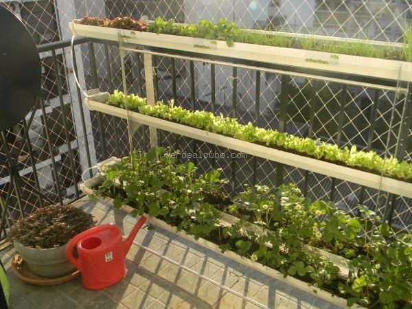 Las terrazas también son un buen lugar si se controlan algunas variables.