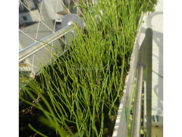 Un espacio muy reducido puede servir para cultivar.