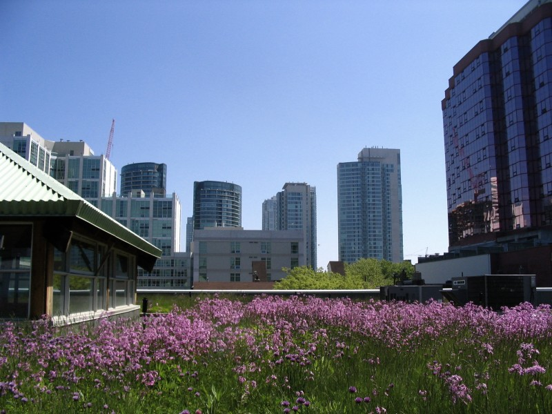 MEC's_green_roof_among_others
