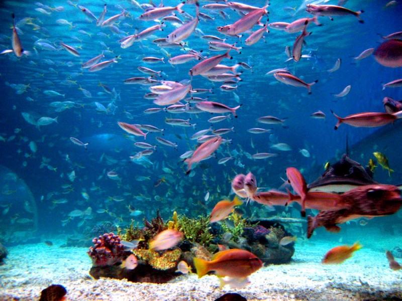 océano con peces