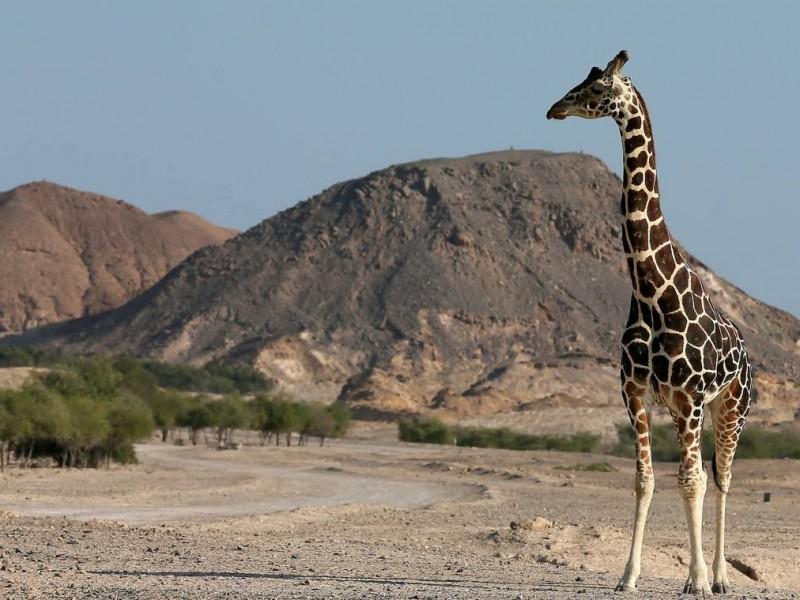 Ecoturismo - Animales en riesgo